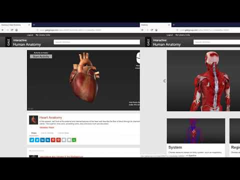 Gale Interactive: Human Anatomy is a Powerful 3D Tool