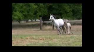 Sold: 2012 Section B Welsh Pony Colt