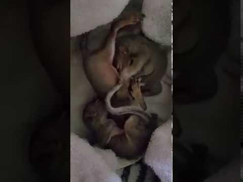 Sleeping adorable baby squirrels