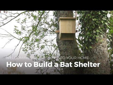 How to Build a Bat House | Biodiversity
