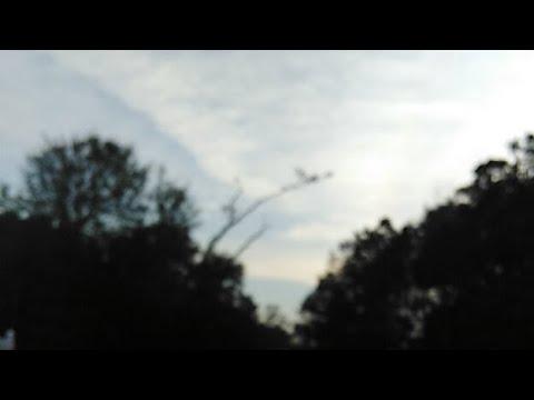 Eagle Watch Live Myrtle Beach