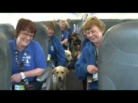NI Guide Dog puppies get training boarding airplanes
