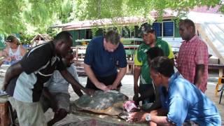 Tagging Hawksbill Sea Turtles in the Arnavon Islands
