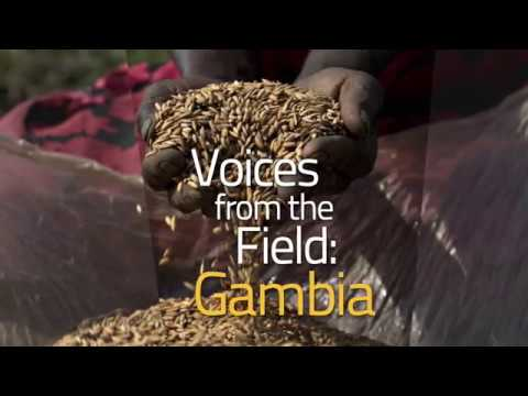 """Voices from the field, Gambia. """"What are the impacts of climate change on farming activities?"""""""