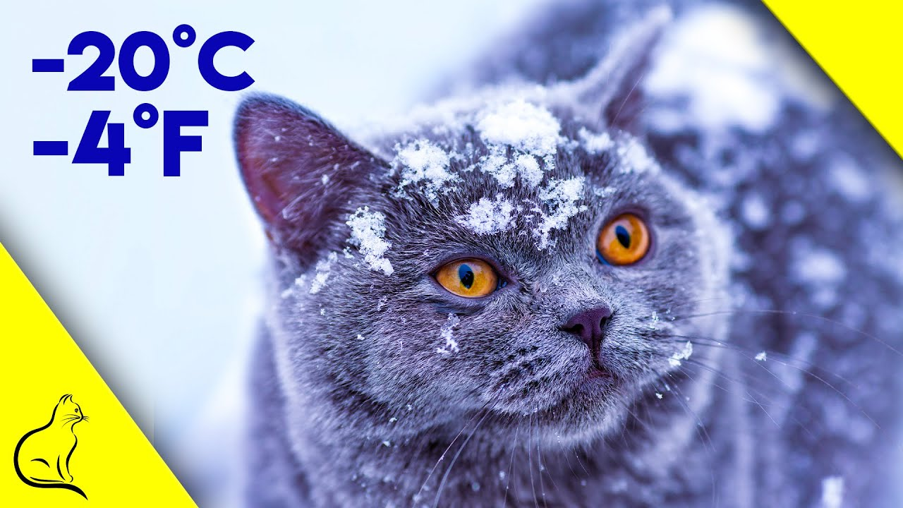 How To Keep Outside Cats Warm During Winter - Life Saving Tips