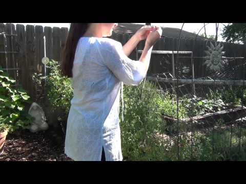 Saving Your Tomatoes from the Birds