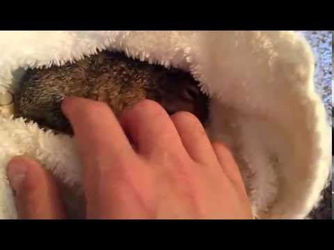 Feeding Baby Squirrels Puppy Formula