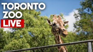 Toronto Zoo Scenic Safari | Opening Day Drive Through | Drive #withme LIVE