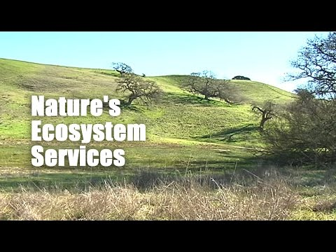 Nature's Ecosystem Services