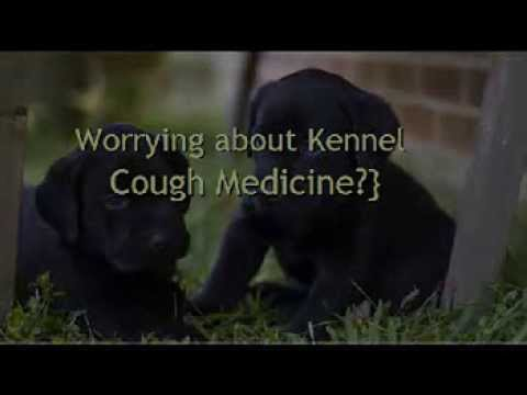 Kennel Cough Medicine