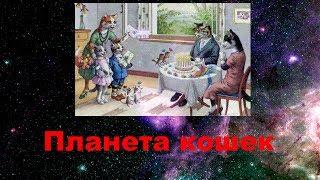 Планета кошек Детская песня про котов и кошек