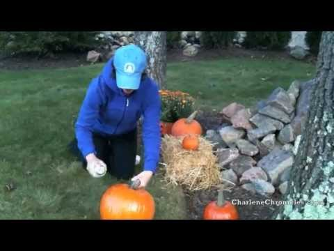 How to Protect Your Pumpkins from Squirrels and Chipmunks