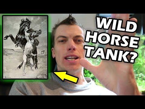 My FAVORITE Aquarium.  History Lesson with Fishtank- WILD HORSE
