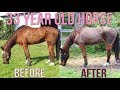 SHAVING OUR 33 YEAR OLD HORSE, CHANO!