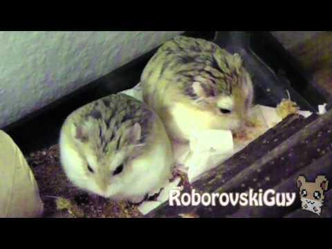 Dinner Time - Robo Hamsters