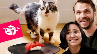 We Tried To Make Sushi For Our Cats • Eating Your Feed •Tasty