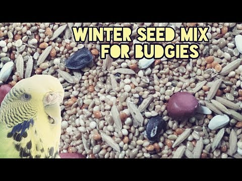 Winter seed mix for budgies - keep your budgies warm and healthy