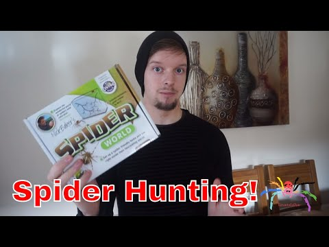 My Living Spider World - Let's Go Hunting!