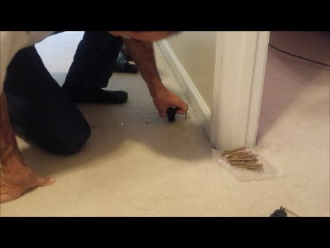 Repair a squeaky floor without removing the carpet.