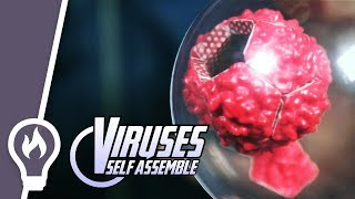 12 magnets show how viruses are built