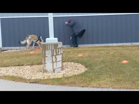 2018.02.24 - UKC Nosework - Elite Exterior - Trial 2 - Rōnin