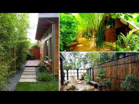 Bamboo ideas for Backyard