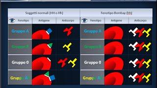 Istologia 37 - Gruppi sanguigni