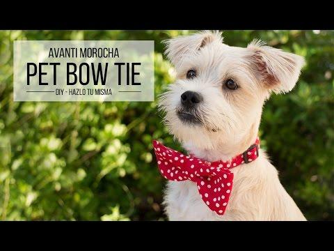DIY Pet Bow tie / Corbatita de mascota