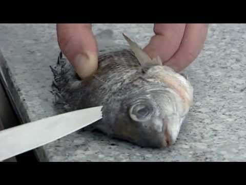 How to fillet a Sea Bream | 214