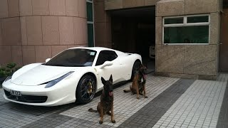 The best Protection Trained Dogs - Premier Protection Dogs Overview 2015