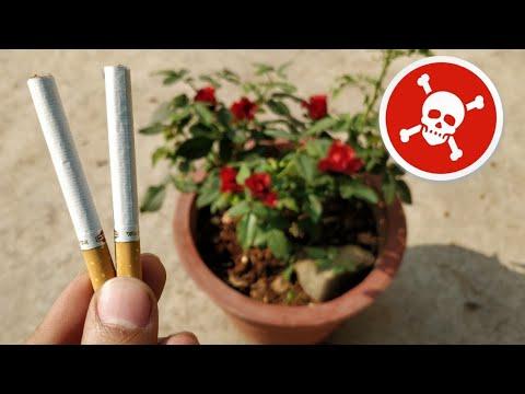 पौधों में Cigarette डालने से देखिए क्या होता है