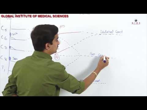 Brcahial Plexus  part - 1  ( usmle video lectures )