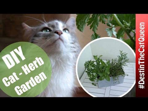 DIY Garden for Cats & You 🌱
