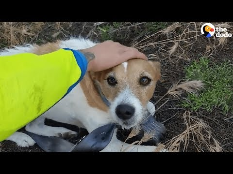Bikers Rescue Dog Lost In Middle Of Nowhere | The Dodo