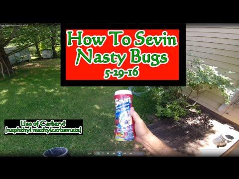 How To Sevin Nasty Bugs Pwalpar VLOG