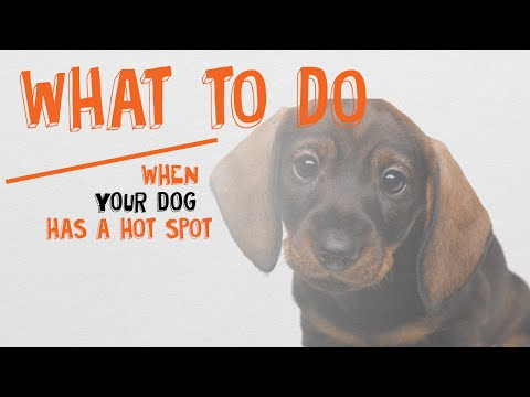 What To Do When Your Dog Has A Hot Spot
