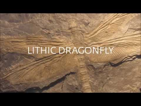 New Fundamentals - Lithic Dragonfly (trailer)