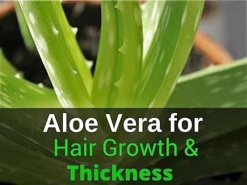 बालों की सारी समस्या का हल है एलोवेरा | Aloe Vera for Hair Growth Home Remedies