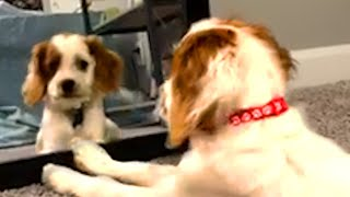 Animals Vs Mirrors! Funny and Cute Videos