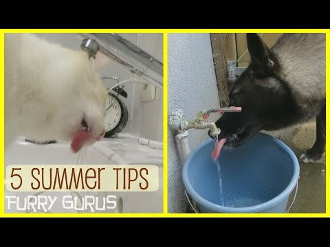 5 Tips to keep your Pets Cool in Summer