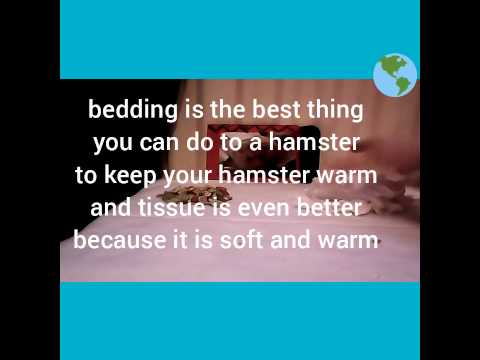 How to keep a hamster warm in the winter