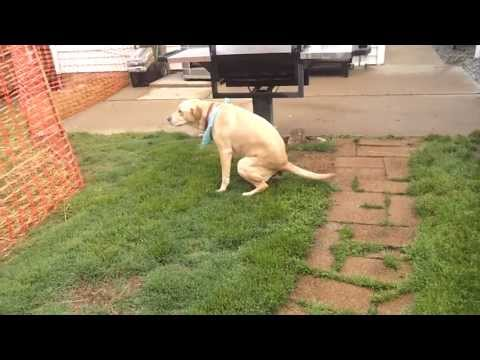 A dog taking a poop!!! Share with a friend.