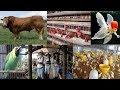 10 Peluang Usaha Bisnis ternak Yang Paling Menguntungkan Dalam Waktu Singkat