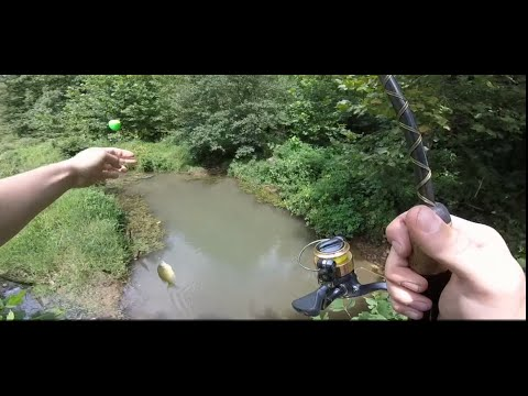 Bluegill fishing in the creek for bait