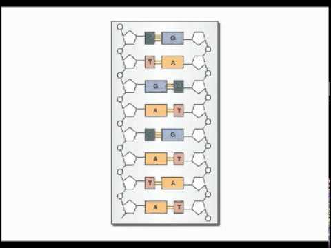 How to design primers for PCR
