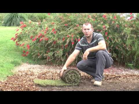 How To Lay Turf Properly | Step By Step Instruction Video