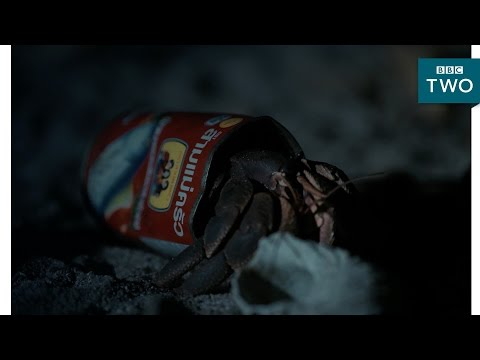Hermit crabs use litter cans as a home - Thailand: Earth's Tropical Paradise - BBC Two
