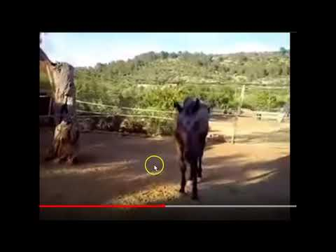 Skinny Horse Eats Chicken - This Is Not Normal & Caused By Poor Human Care