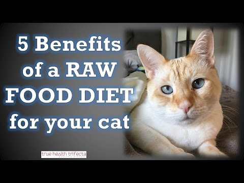 5 Benefits of a Raw Food Diet for Cats – Healthy Homemade Cat Food / Raw Meat Diet for Cats