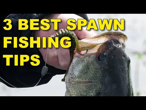 The Best Spawn Fishing Tips (Because They Work!)  | Bass Fishing